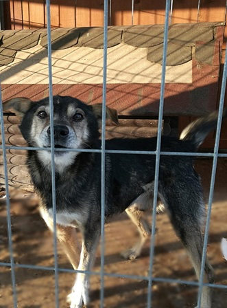 pies-adopcja2