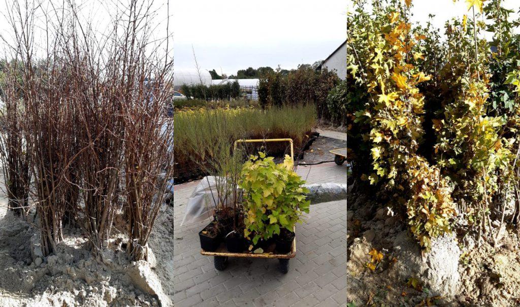 przykładowe sadzonki drzew podczas akcji sadzenia